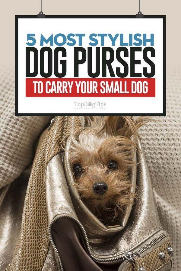 Top 5 sacs à main élégants pour petits chiens