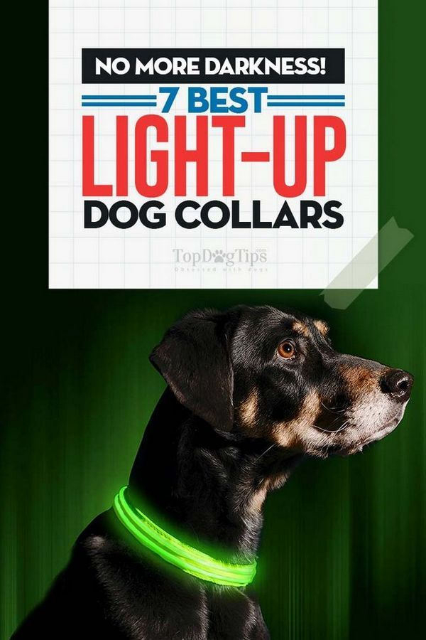 Top 7 des meilleurs colliers lumineux pour chiens