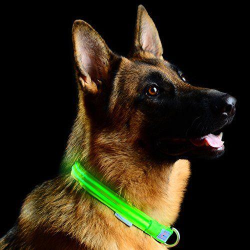 Collier pour chien LED à boucle métallique de Pet Industries