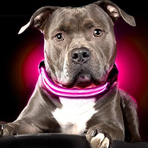 Collier pour chien Ultimate LED Shine for Dogs