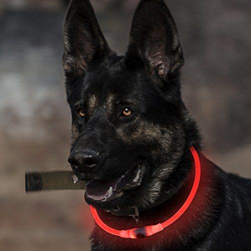 Collier de chien lumineux BSeen LED