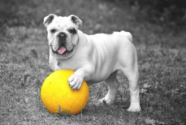 Les meilleurs jouets pour chiens que votre animal doit avoir
