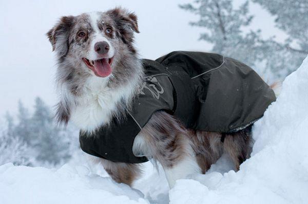 Augmentez la chaleur avec des manteaux d`hiver pour chiens