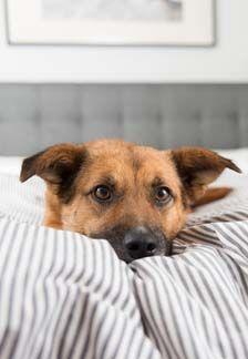 Types de literie pour chien: nattes, lits, oreillers et canapés