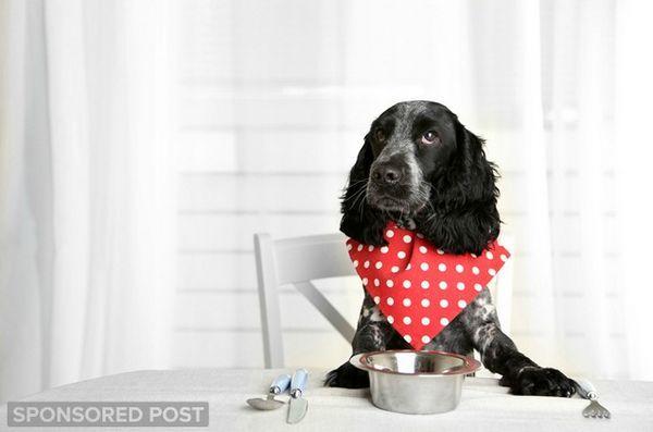 Des régimes protéinés uniques qui favorisent le bien-être de votre chien