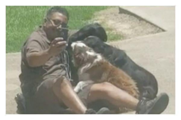 Le client attrape le conducteur d`UPS prenant des selfies de chien et nous l`aimons!