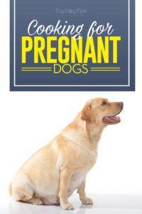 Que nourrir un chien enceinte