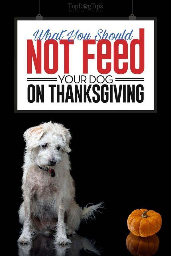 Quoi ne pas nourrir vos chiens en action de grâces