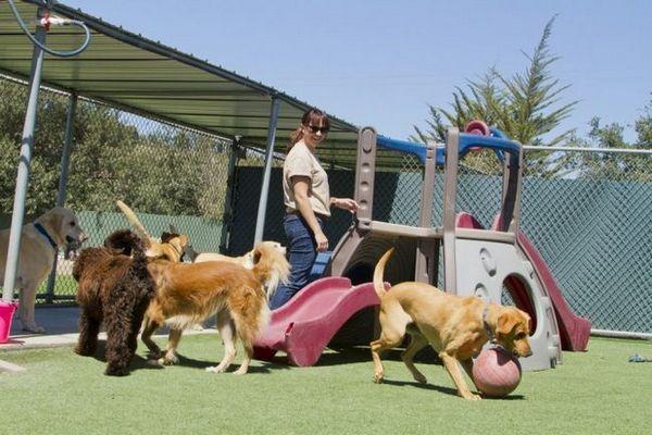 Ce que vous devez savoir avant de commencer une activité de pension pour chien