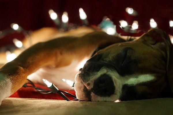 Pourquoi vous ne devriez pas donner des animaux de compagnie comme cadeaux pour Noël