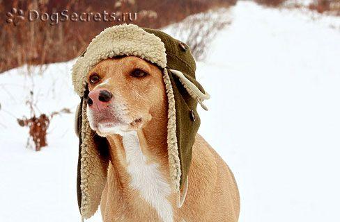 Types de vêtements d`hiver pour chiens