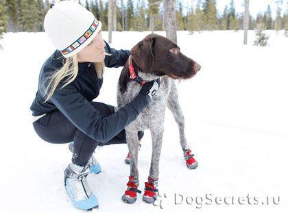 Où acheter des vêtements d`hiver pour chiens