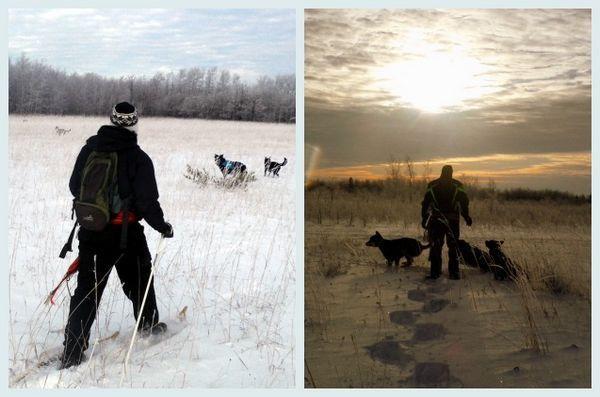 Entraînement hivernal: le chien de raquette