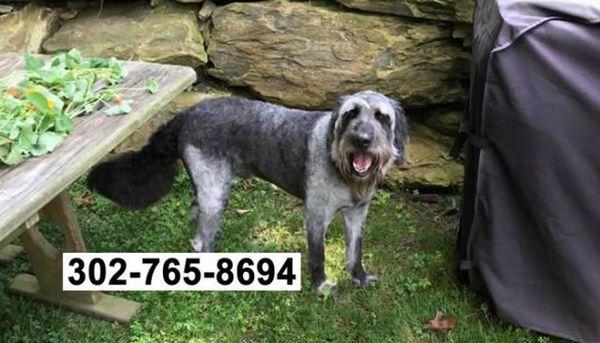 Une femme cherche son chien perdu et en trouve huit autres