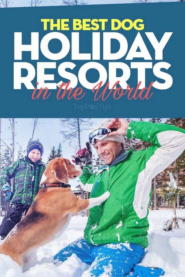 Les meilleures stations de vacances acceptant les chiens au monde