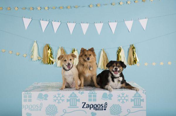 Zappos vise à donner aux animaux de compagnie des «maisons pour les pawlidayz»