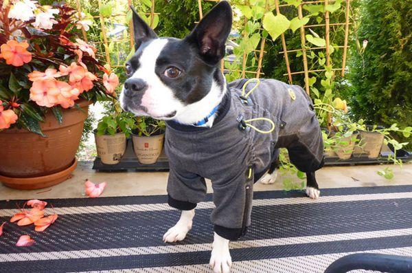 Les costumes Zippy pour chiens sont parfaits en un tour de main!